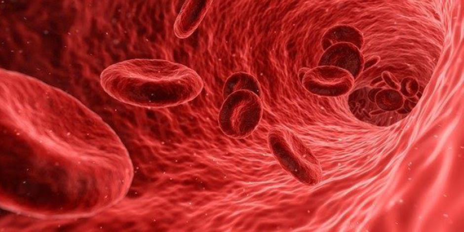Blood cells flowing around the body